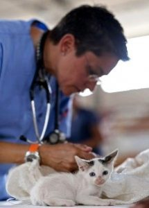 Meadow Lakes Alaska vet tech examining kittens